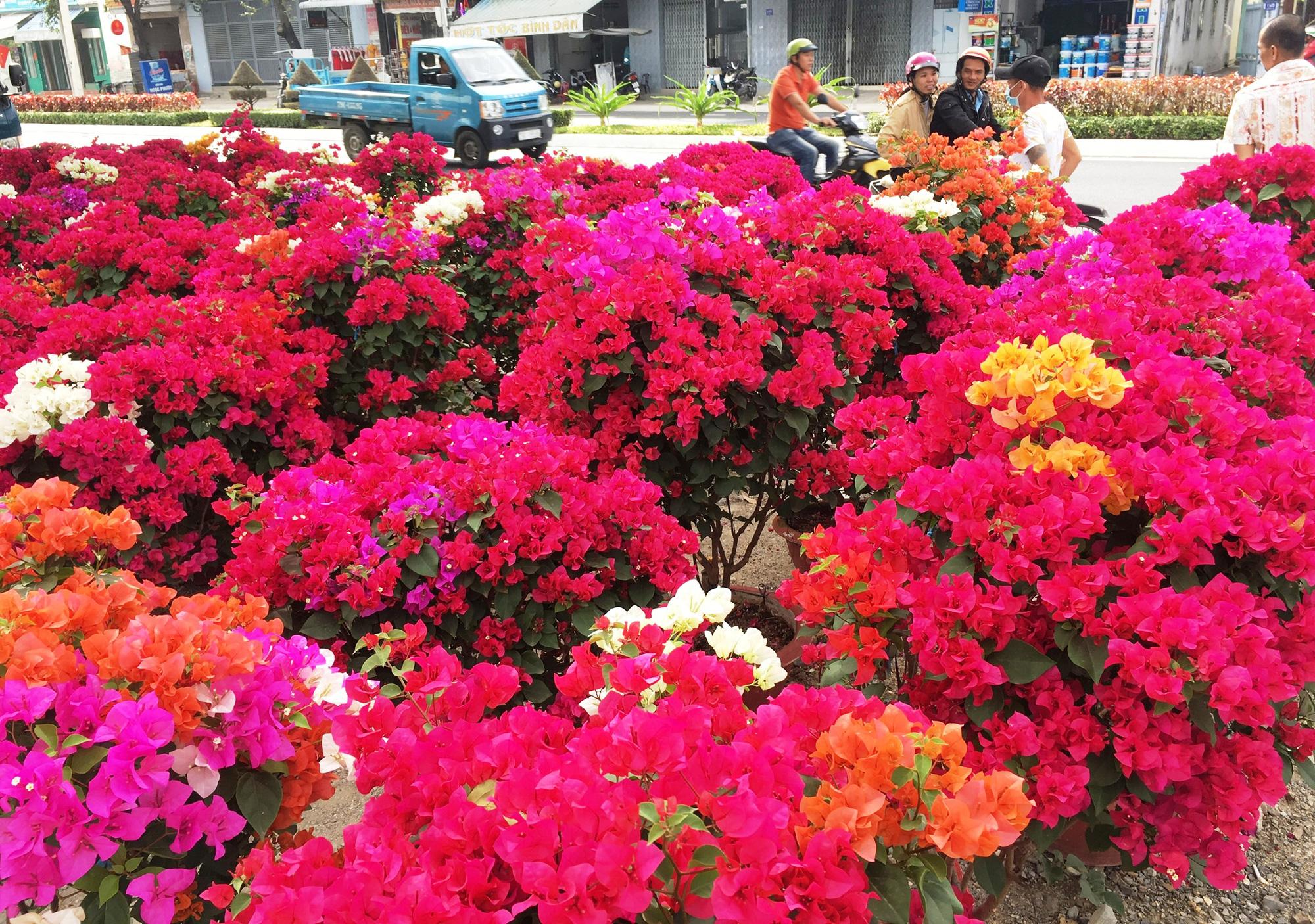 Những loại hoa, quả đẹp phục vụ Tết - Ảnh 3.