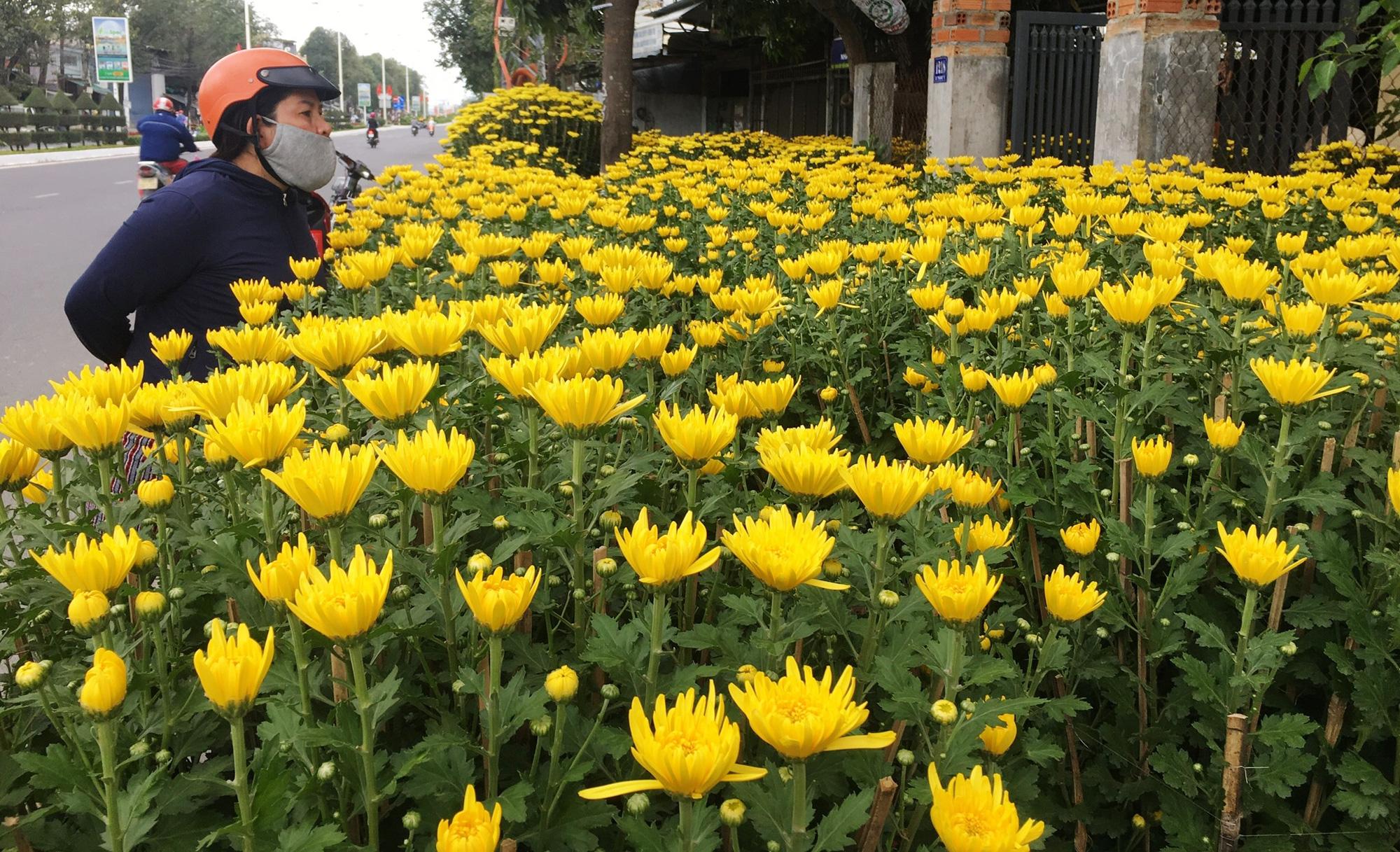 Những loại hoa, quả đẹp phục vụ Tết - Ảnh 2.