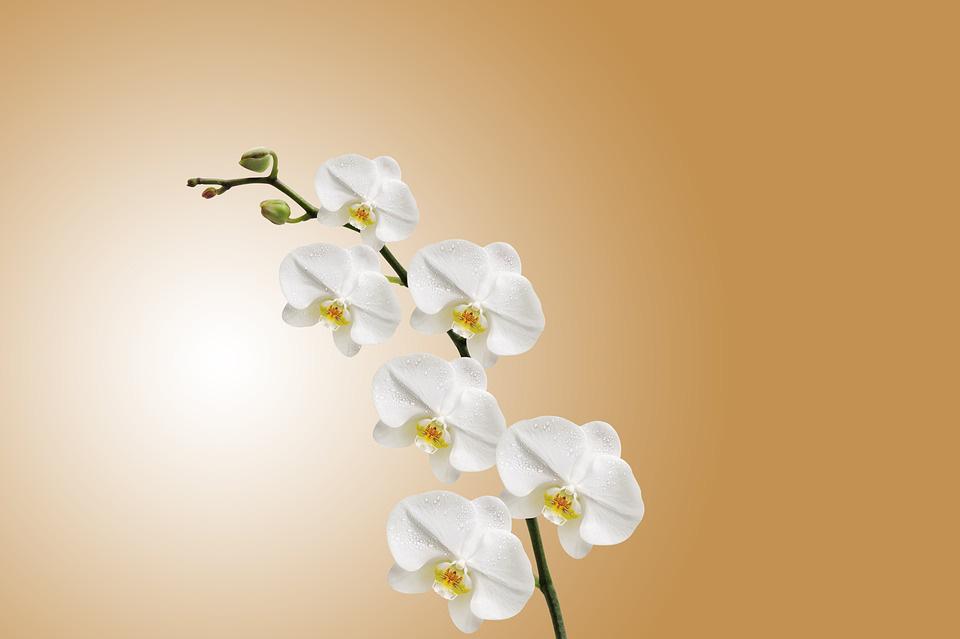 Bật mí loài hoa mang lại phúc lộc, tài danh cho 12 con giáp trong năm Tân Sửu 2021 - Ảnh 6.