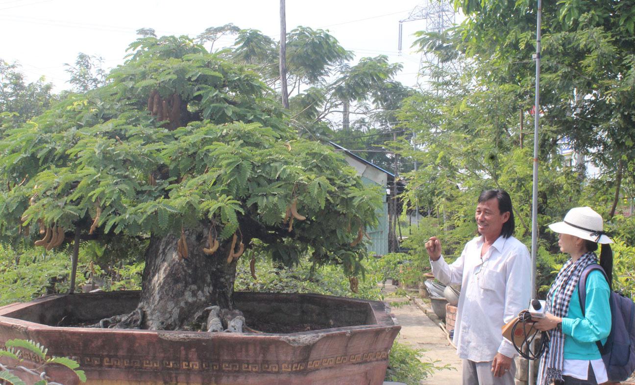 Long An: Chơi cây kiểng độc lạ, hình thù kỳ dị mà hái ra tiền tỷ - Ảnh 1.