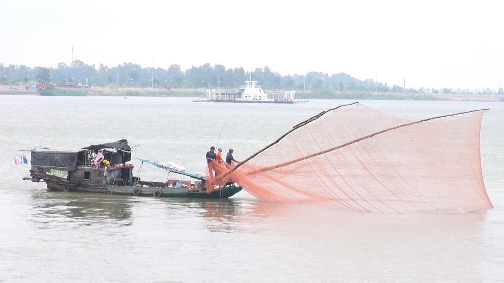 An Giang: Bắt cá linh trên sông Tiền, bất ngờ lại bắt được cả loài cá có cái tên mắc cười, to cồ cộ - Ảnh 2.