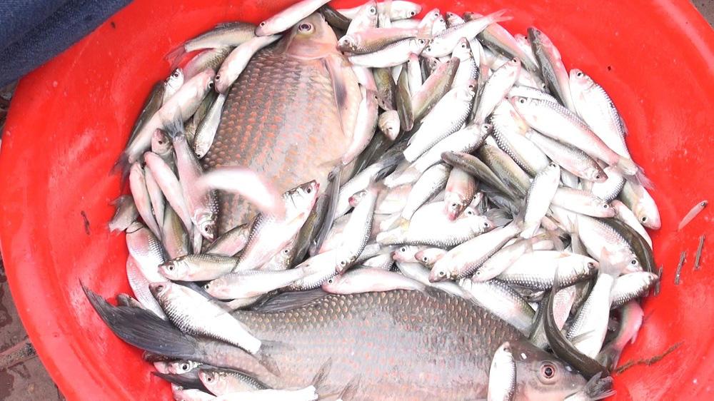 An Giang: Bắt cá linh trên sông Tiền, bất ngờ lại bắt được cả loài cá có cái tên mắc cười, to cồ cộ - Ảnh 4.