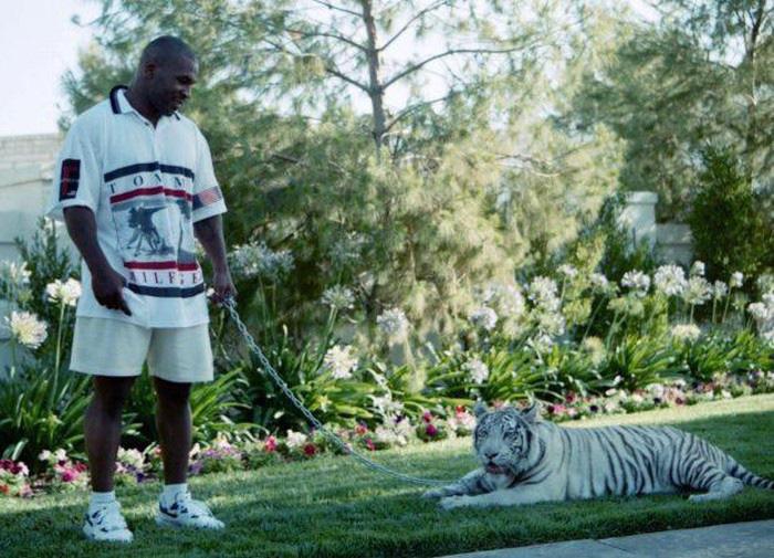 Dị như Mike Tyson: Nhốt HLV vào chuồng hổ vì... thích thế - Ảnh 2.
