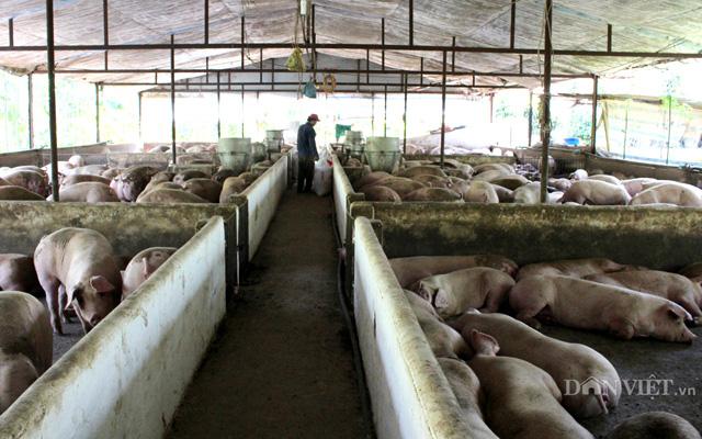 Một trại chăn nuôi heo gia công cho công ty chăn nuôi CP ở Đồng Nai