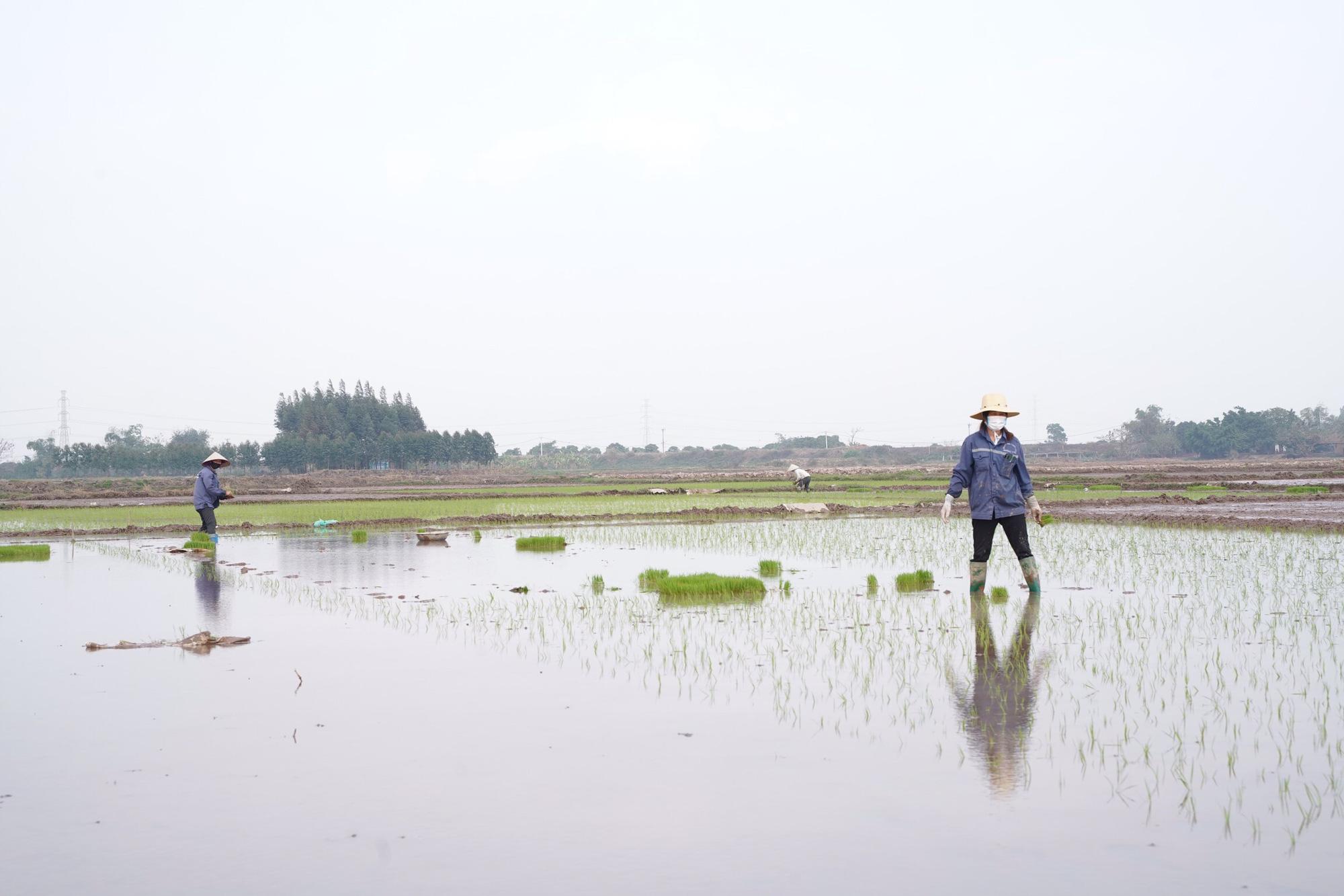 Tình làng trong tâm dịch Chí Linh - Ảnh 9.