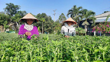Nghề lạ ở miền Tây: Vô vườn nhà người ta bứt bông, nhặt nụ thu tiền triệu mỗi ngày - Ảnh 1.