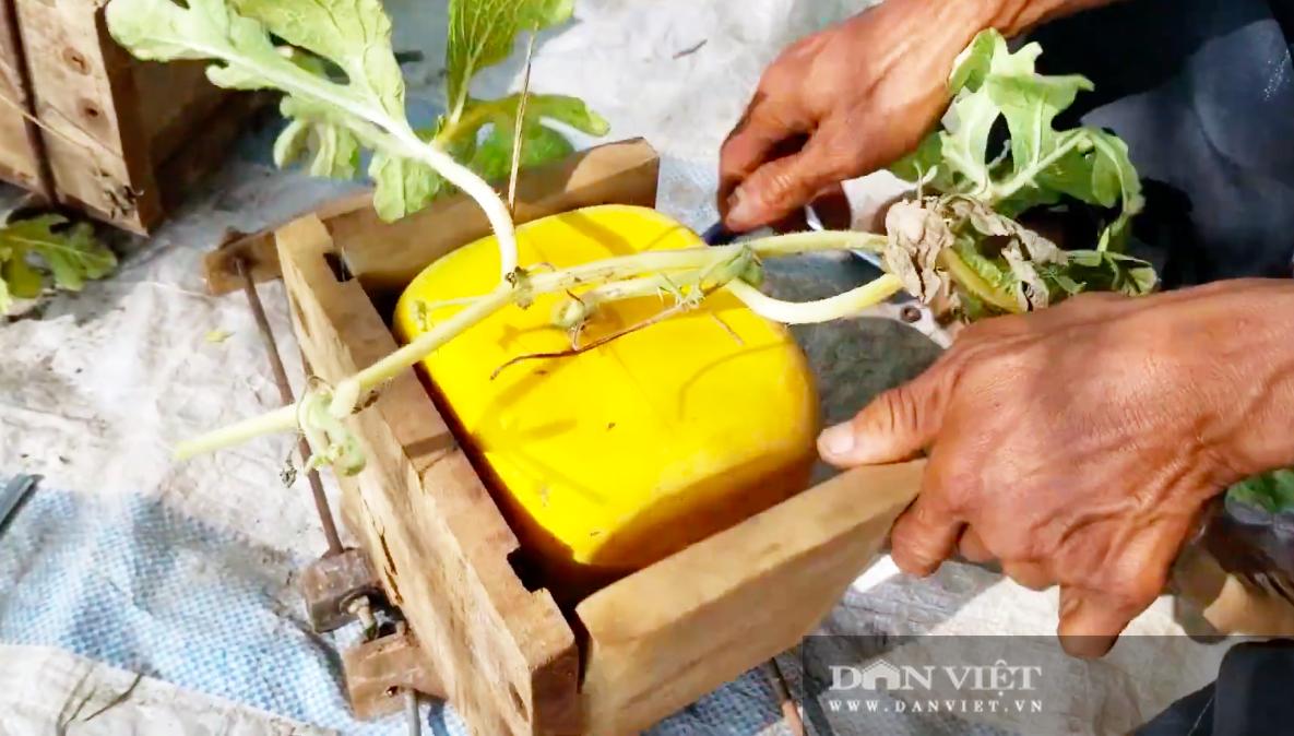 Kỳ công tạo ra dưa hấu vuông, dưa hấu thỏi vàng giá tiền triệu của nông dân miền Tây - Ảnh 2.