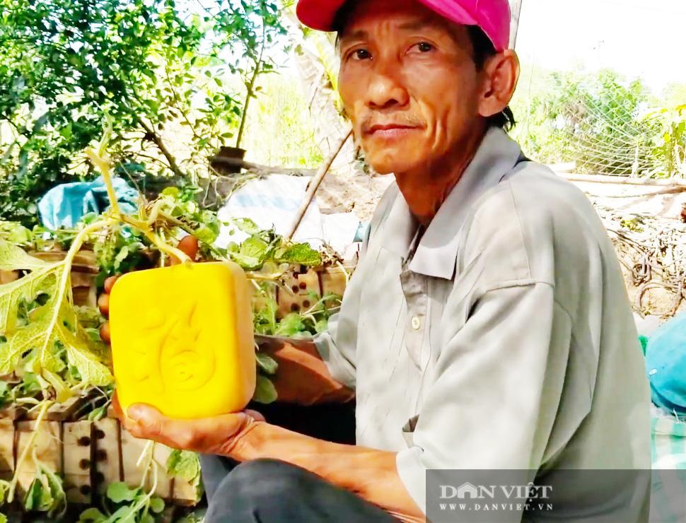 Kỳ công tạo ra dưa hấu vuông, dưa hấu thỏi vàng giá tiền triệu của nông dân miền Tây - Ảnh 4.