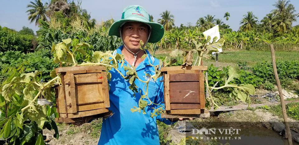 Kỳ công tạo ra dưa hấu vuông, dưa hấu thỏi vàng giá tiền triệu của nông dân miền Tây - Ảnh 1.
