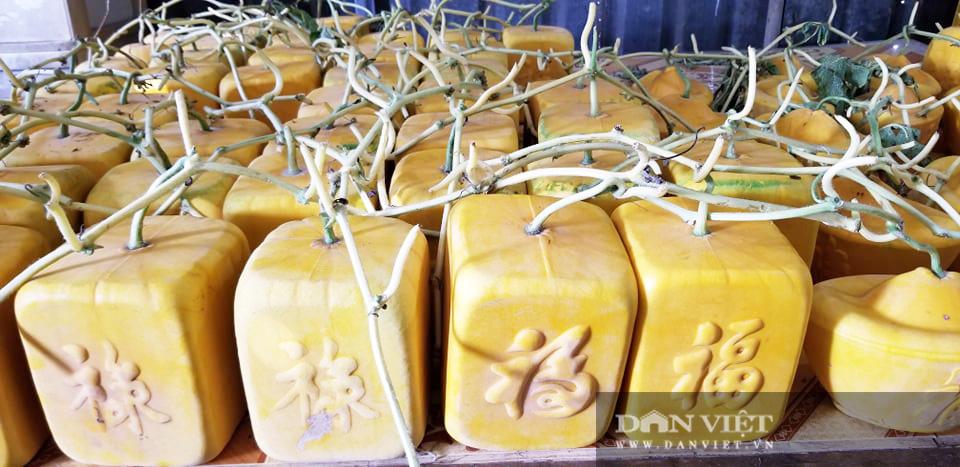 Kỳ công tạo ra dưa hấu vuông, dưa hấu thỏi vàng giá tiền triệu của nông dân miền Tây - Ảnh 5.
