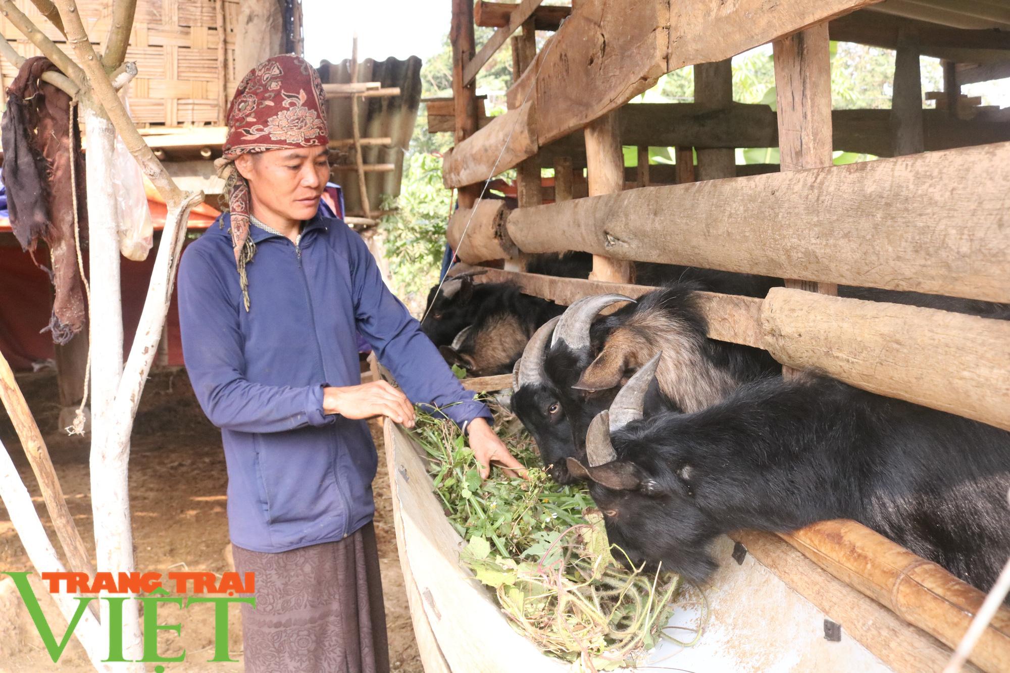 Mường Sại chú trọng phát triển chăn nuôi - Ảnh 1.