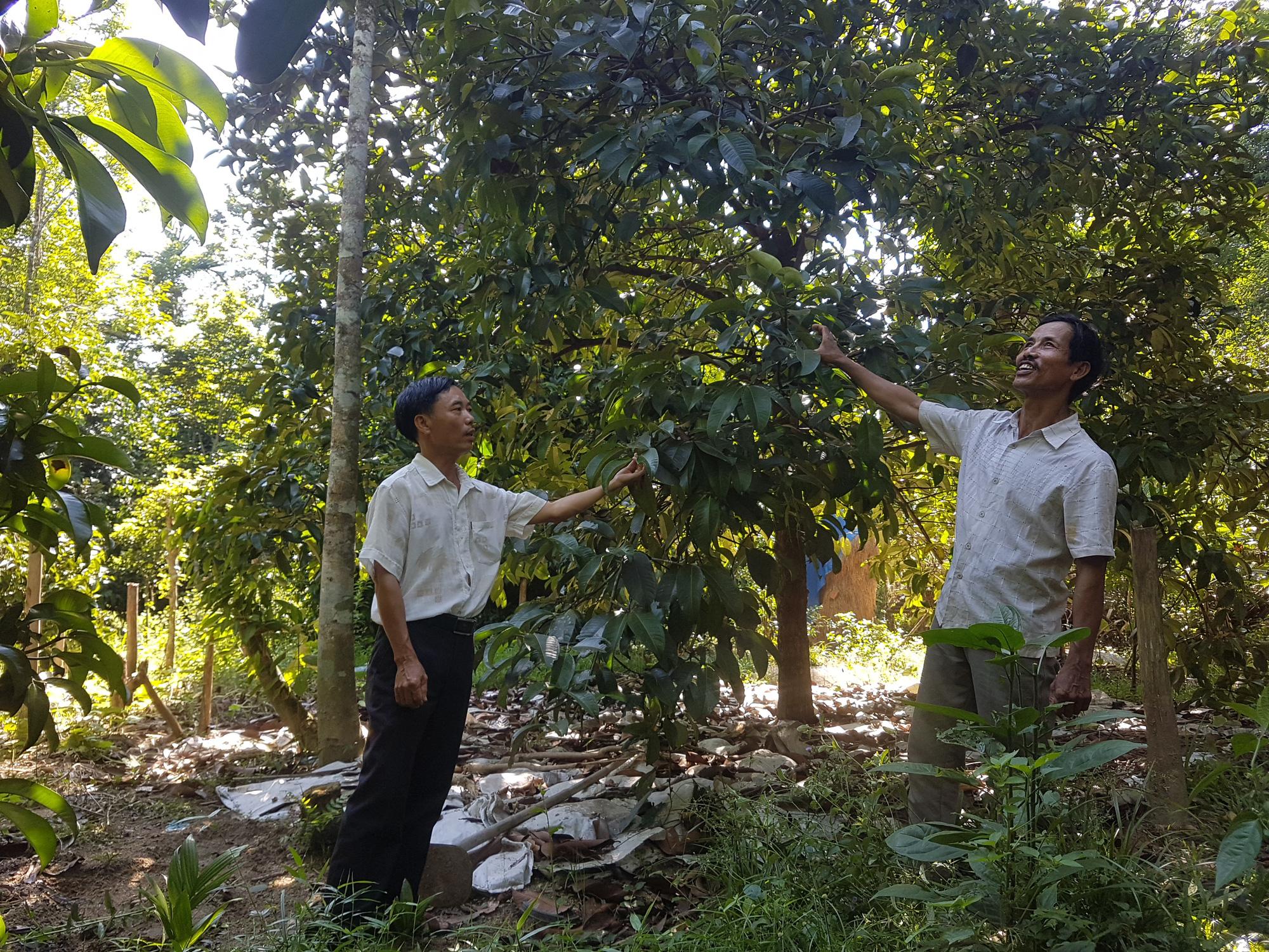 GĐ Sở NNPTNT tỉnh Quảng Nam - Đưa công nghệ cao vào giúp nông dân     - Ảnh 3.