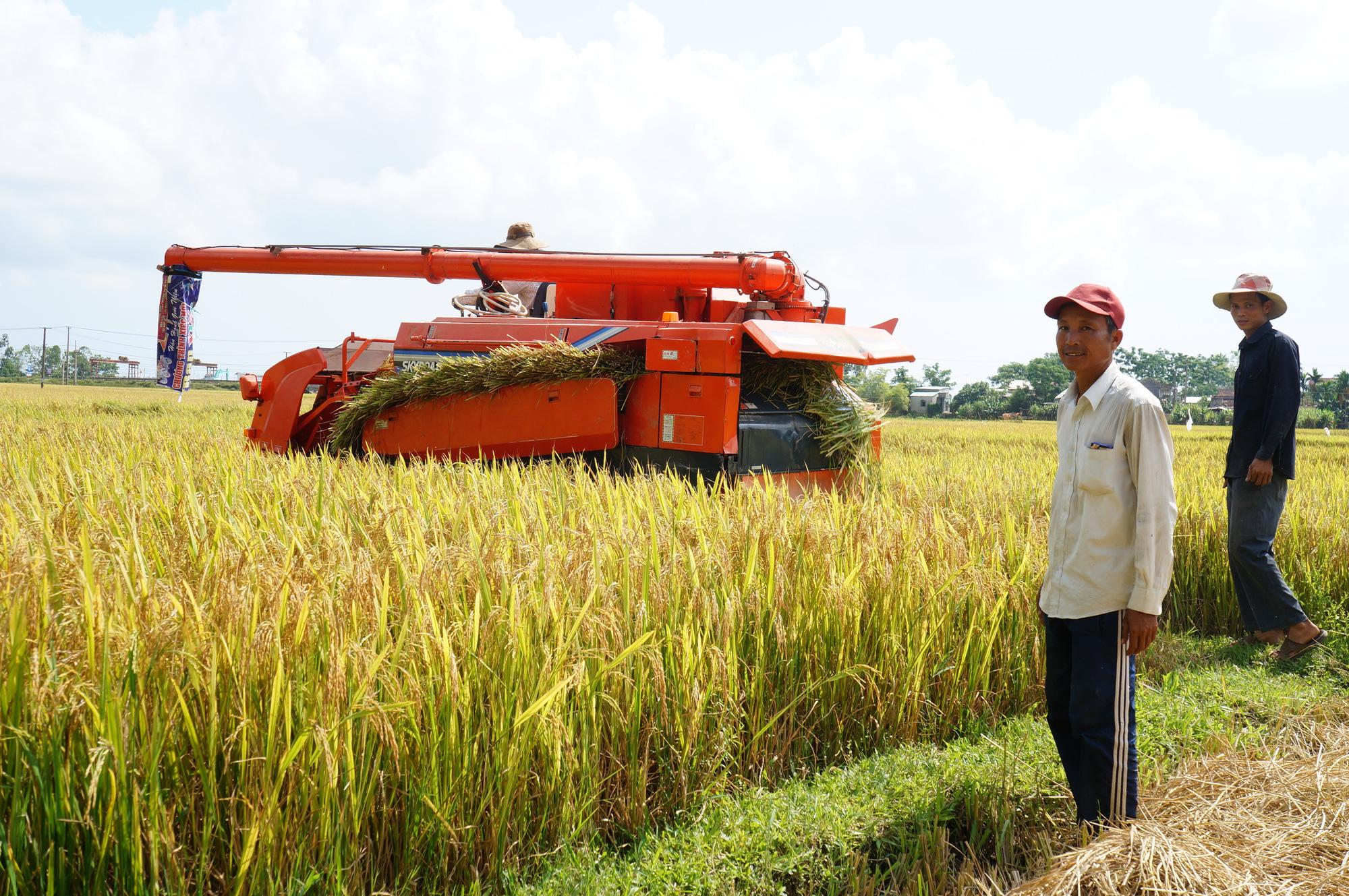 GĐ Sở NNPTNT tỉnh Quảng Nam - Đưa công nghệ cao vào giúp nông dân     - Ảnh 5.