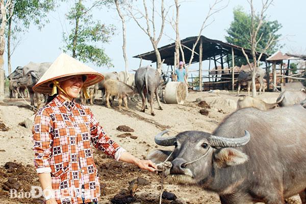 """Đồng Nai: Buồn vui nghề nuôi trâu đàn cả trăm con béo mập, kiêm """"cò đất"""" kiếm vài chục triệu - Ảnh 1."""