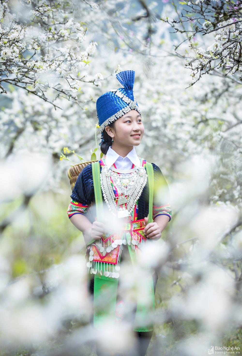 Mê mẩn với những đồi hoa mận nở trắng tinh khôi ở miền Tây Nghệ An, Mộc Châu, Vân Hồ… - Ảnh 12.