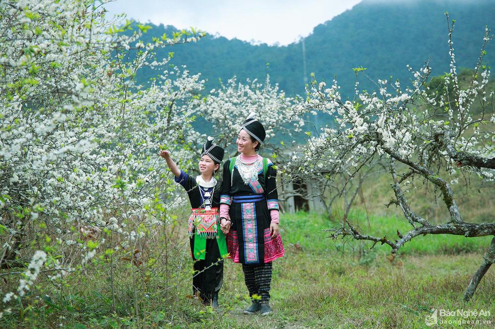 Mê mẩn với những đồi hoa mận nở trắng tinh khôi ở miền Tây Nghệ An, Mộc Châu, Vân Hồ… - Ảnh 13.