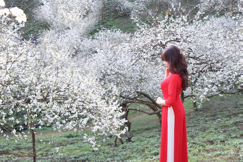 Mê mẩn với những đồi hoa mận nở trắng tinh khôi ở miền Tây Nghệ An, Mộc Châu, Vân Hồ… - Ảnh 3.