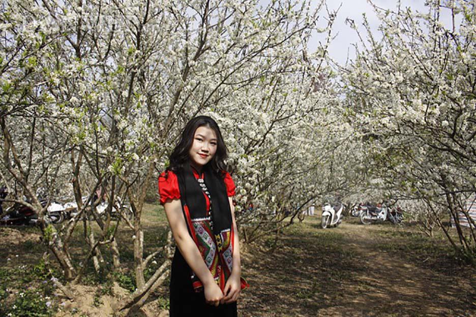 Mê mẩn với những đồi hoa mận nở trắng tinh khôi ở miền Tây Nghệ An, Mộc Châu, Vân Hồ… - Ảnh 2.