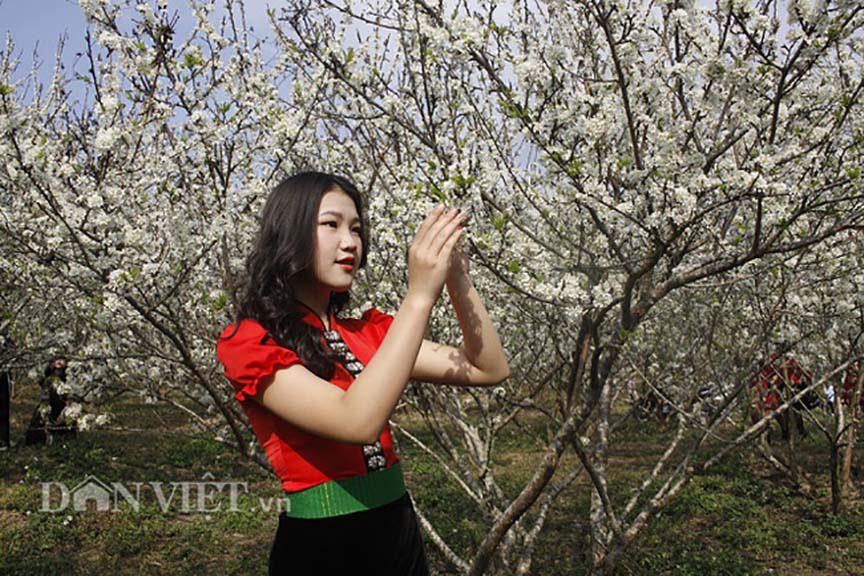 Mê mẩn với những đồi hoa mận nở trắng tinh khôi ở miền Tây Nghệ An, Mộc Châu, Vân Hồ… - Ảnh 1.
