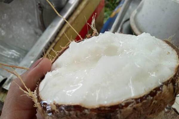 Trà Vinh: Trái dừa sáp đặc sản đem làm mứt Tết, giá 400 ngàn đồng/ký vẫn không có mà mua - Ảnh 1.