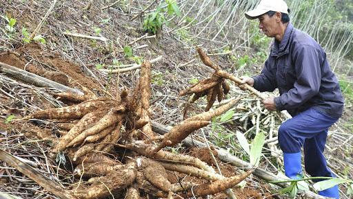 Loại nông sản gì bất ngờ được Trung Quốc tăng tốc thu mua, khối lượng xuất khẩu tăng gần 100%? - Ảnh 1.