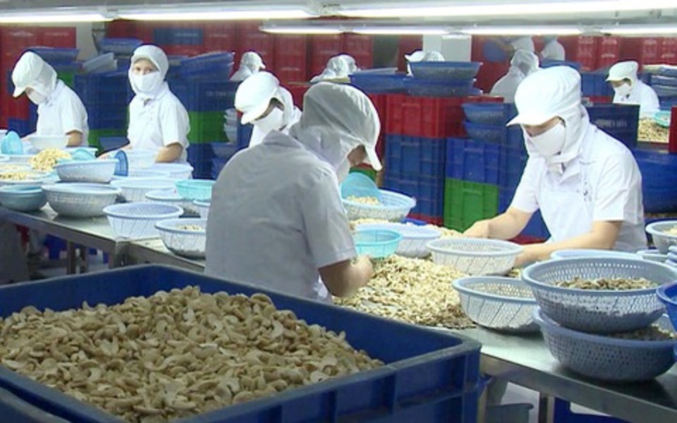 Xuất khẩu điều Việt Nam cao kỷ lục - Ảnh 1.