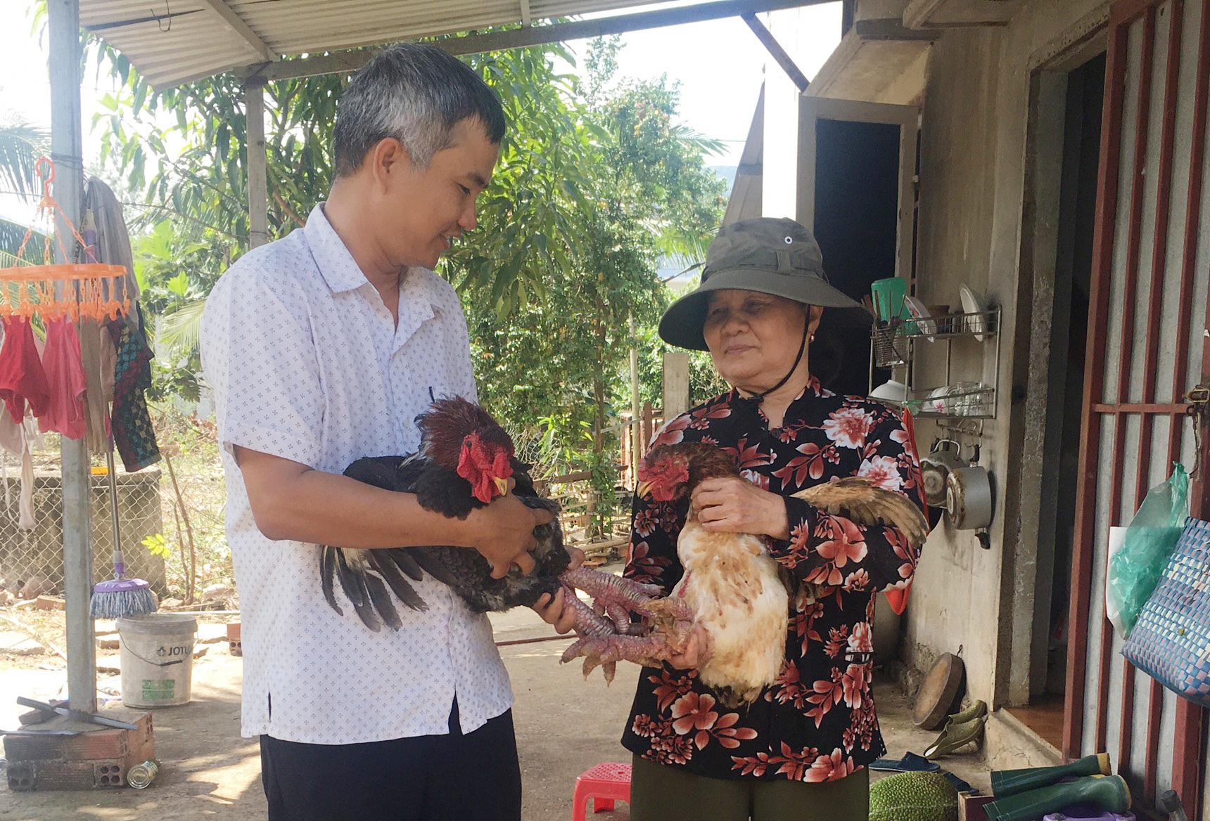 Bà Rịa-Vũng Tàu: Nuôi heo rừng, nuôi gà Đông Tảo bán đắt hàng dịp Tết, gà chân rồng có con bán tới 10 triệu đồng - Ảnh 1.