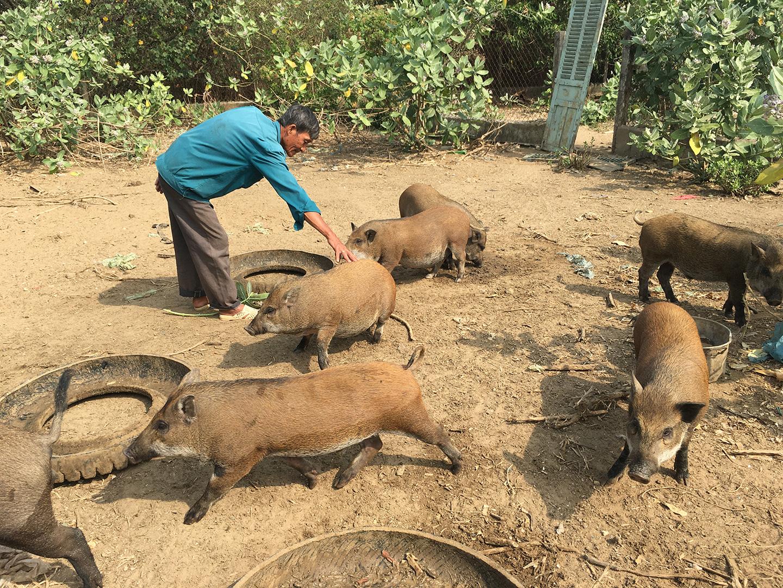 Bà Rịa-Vũng Tàu: Nuôi heo rừng, nuôi gà Đông Tảo bán đắt hàng dịp Tết, gà chân rồng có con bán tới 10 triệu đồng - Ảnh 3.