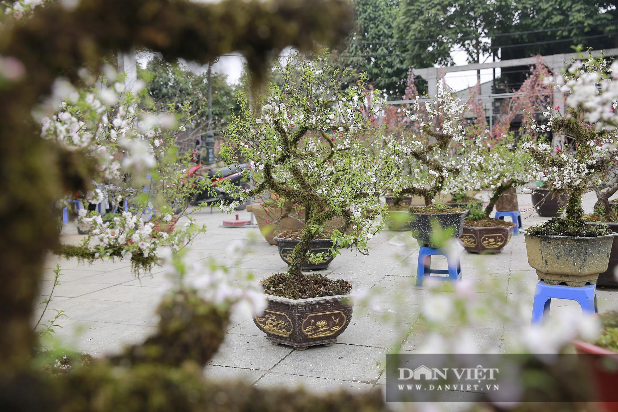 """Loài cây quý hiếm để trong nhà là """"sang"""" hút khách dịp Tết Nguyên đán - Ảnh 11."""