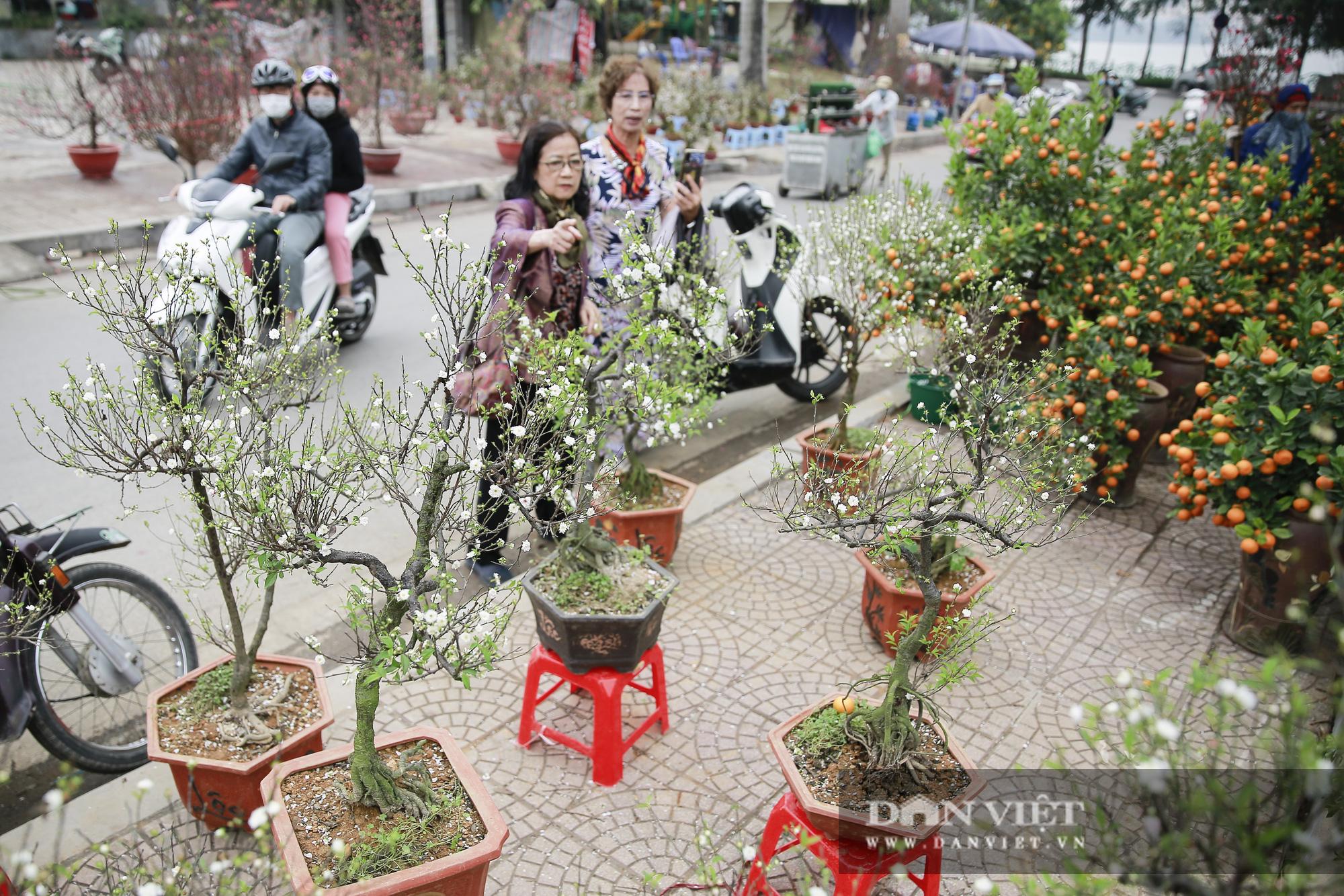 """Loài cây quý hiếm để trong nhà là """"sang"""" hút khách dịp Tết Nguyên đán - Ảnh 2."""