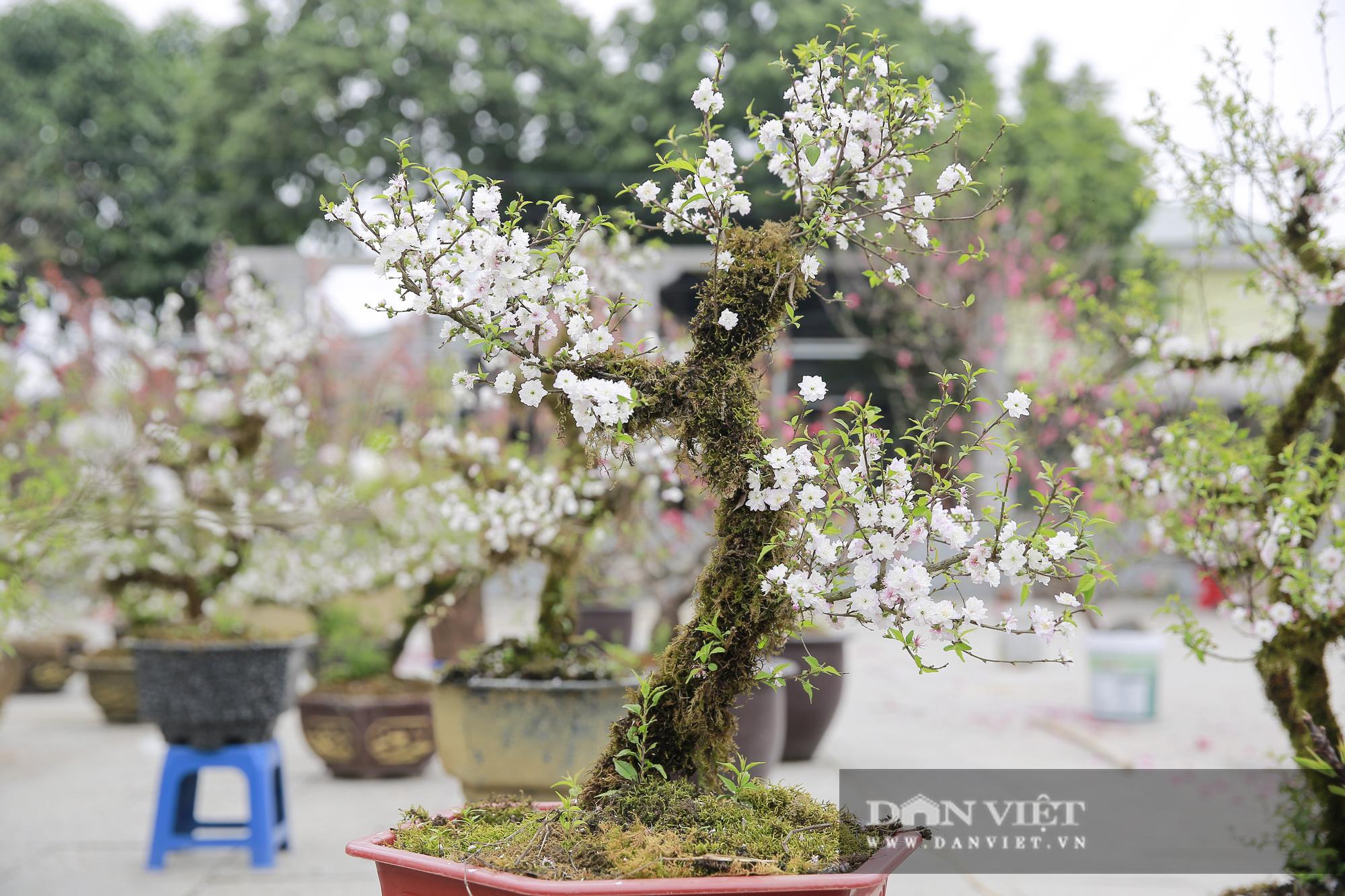 """Loài cây quý hiếm để trong nhà là """"sang"""" hút khách dịp Tết Nguyên đán - Ảnh 3."""