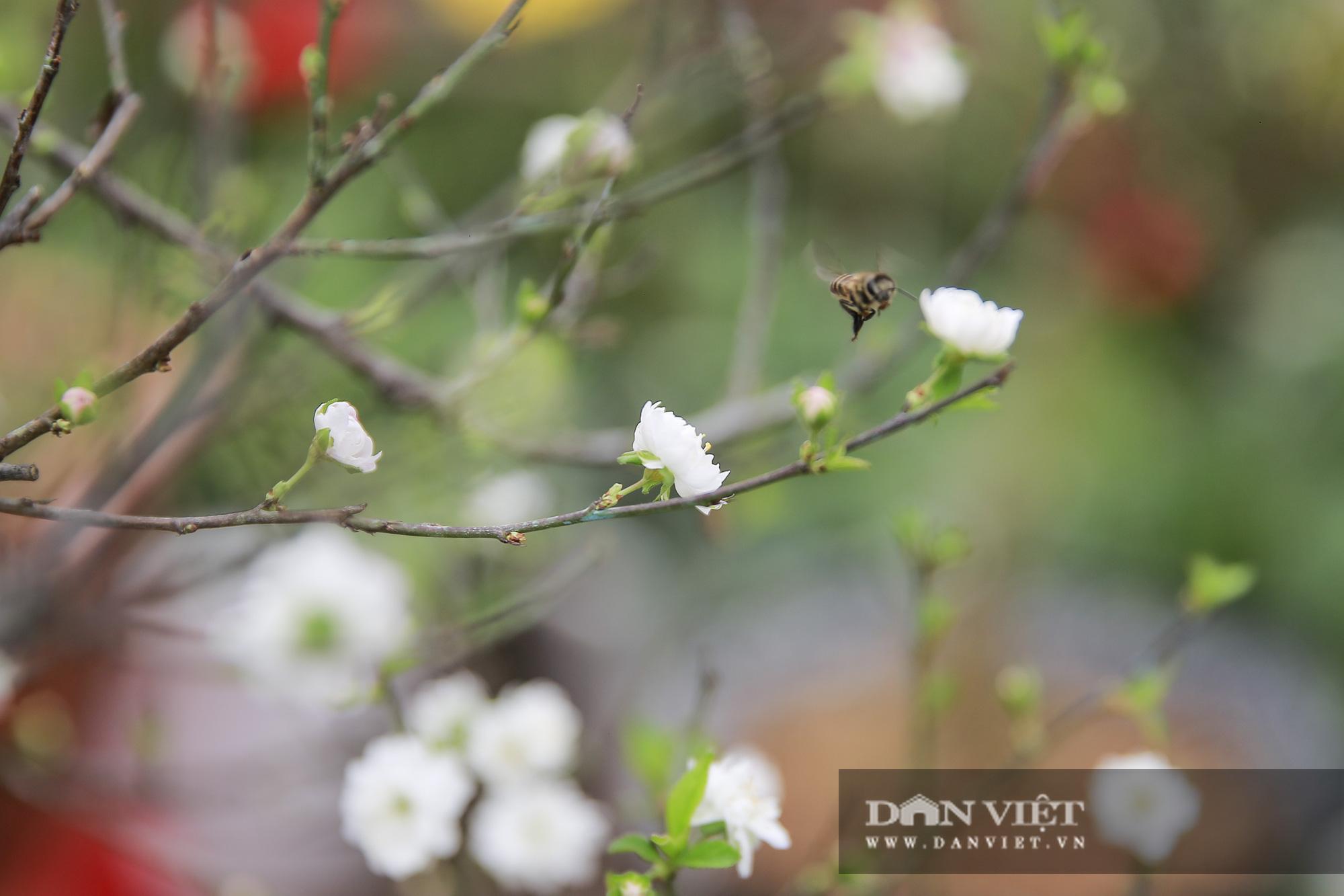 """Loài cây quý hiếm để trong nhà là """"sang"""" hút khách dịp Tết Nguyên đán - Ảnh 4."""