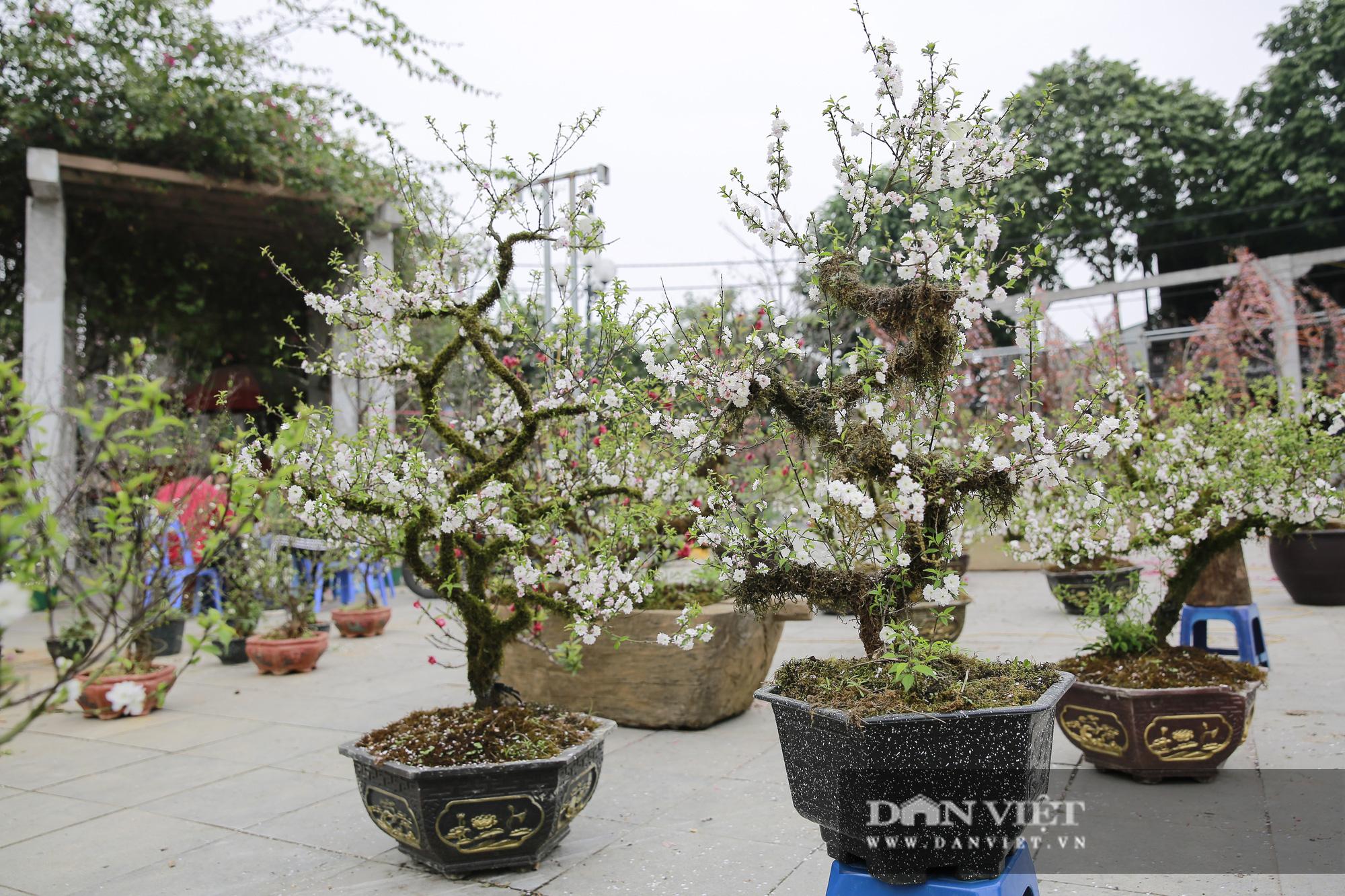 """Loài cây quý hiếm để trong nhà là """"sang"""" hút khách dịp Tết Nguyên đán - Ảnh 8."""