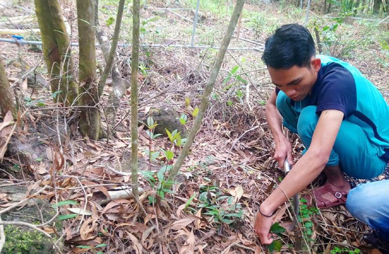 Phú Yên: Lan kim tuyến là loài cây gì, quý hiếm thế nào mà ở huyện này đang gấp rút bảo tồn, nhân giống? - Ảnh 2.