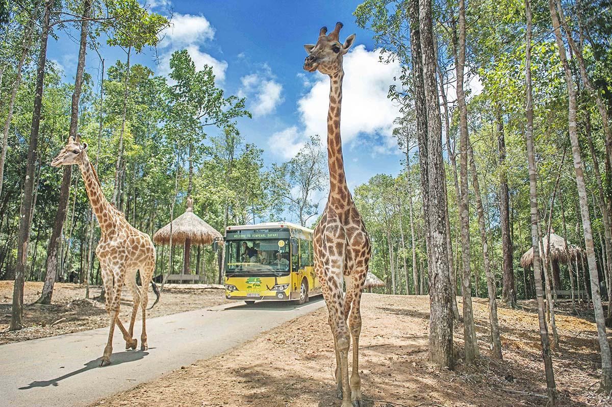 Mê mẩn ngắm sư tử con, hổ... và những góc ảnh dễ thương tại vườn thú bán hoang dã Phú Quốc - Ảnh 14.