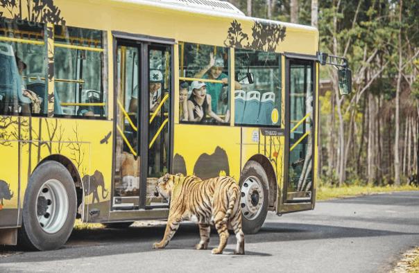 Mê mẩn ngắm sư tử con, hổ... và những góc ảnh dễ thương tại vườn thú bán hoang dã Phú Quốc - Ảnh 11.