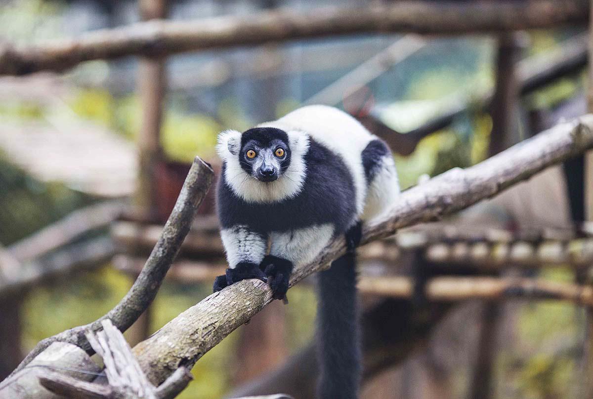Mê mẩn ngắm sư tử con, hổ... và những góc ảnh dễ thương tại vườn thú bán hoang dã Phú Quốc - Ảnh 4.