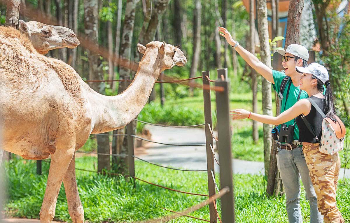 Mê mẩn ngắm sư tử con, hổ... và những góc ảnh dễ thương tại vườn thú bán hoang dã Phú Quốc - Ảnh 6.