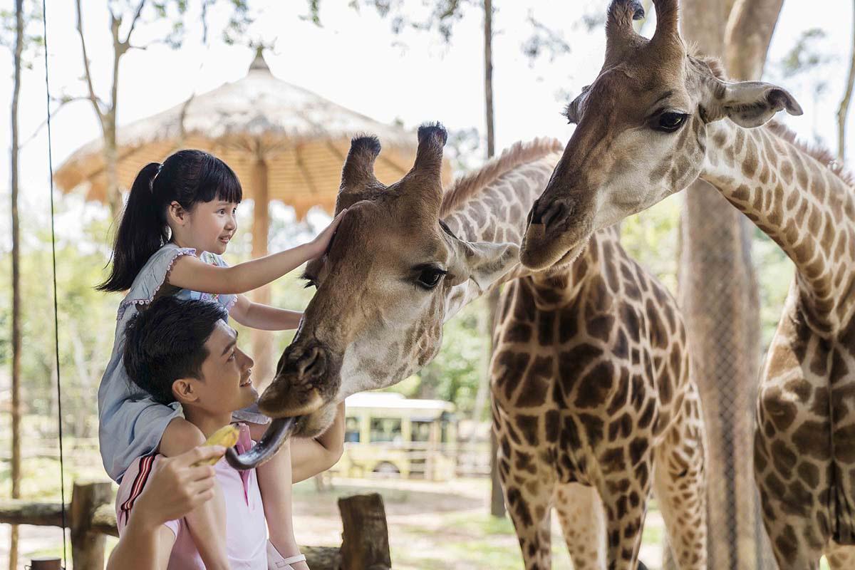 Mê mẩn ngắm sư tử con, hổ... và những góc ảnh dễ thương tại vườn thú bán hoang dã Phú Quốc - Ảnh 8.