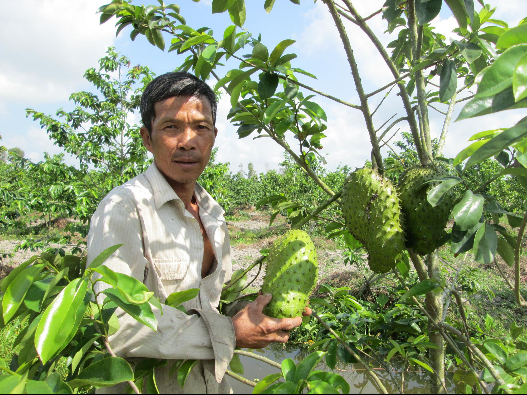Kiên Giang: Trồng mãng cầu xiêm, cây nào cũng ra trái to bự, nặng 2-3 ký, ông nông dân này trúng lớn - Ảnh 1.