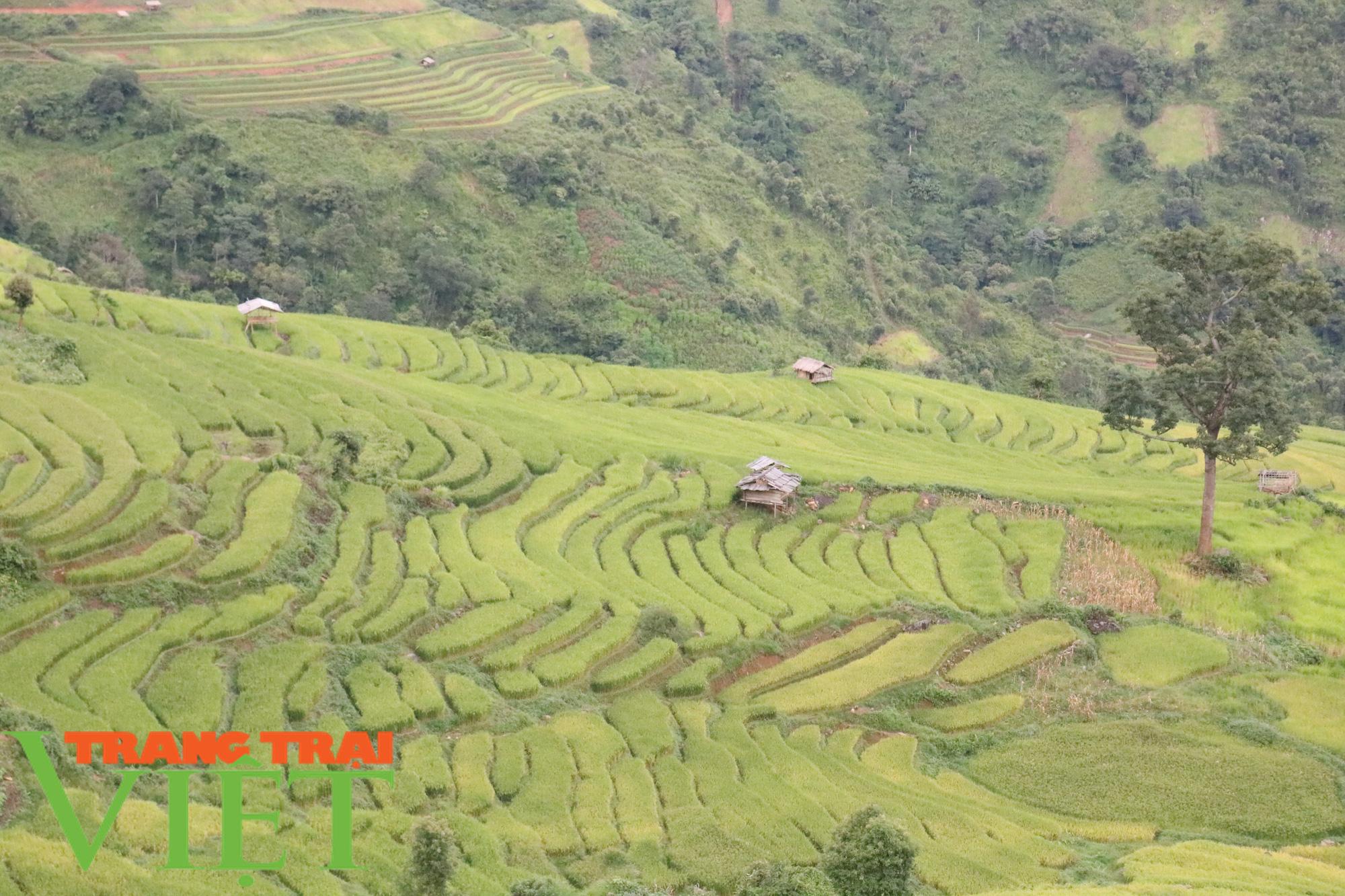Chiềng Ân mở rộng diện tích khai hoang ruộng bậc thang - Ảnh 3.