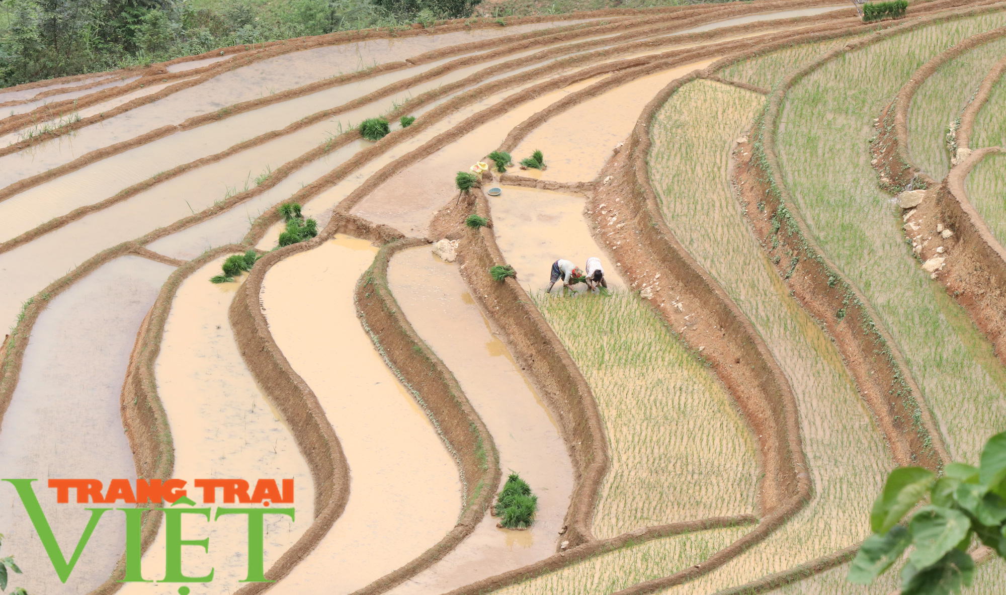 Chiềng Ân mở rộng diện tích khai hoang ruộng bậc thang - Ảnh 1.