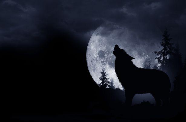 """Câu chuyện kỳ quái về """"người chó"""" ám ảnh một người đàn ông cả cuộc đời - Ảnh 4."""