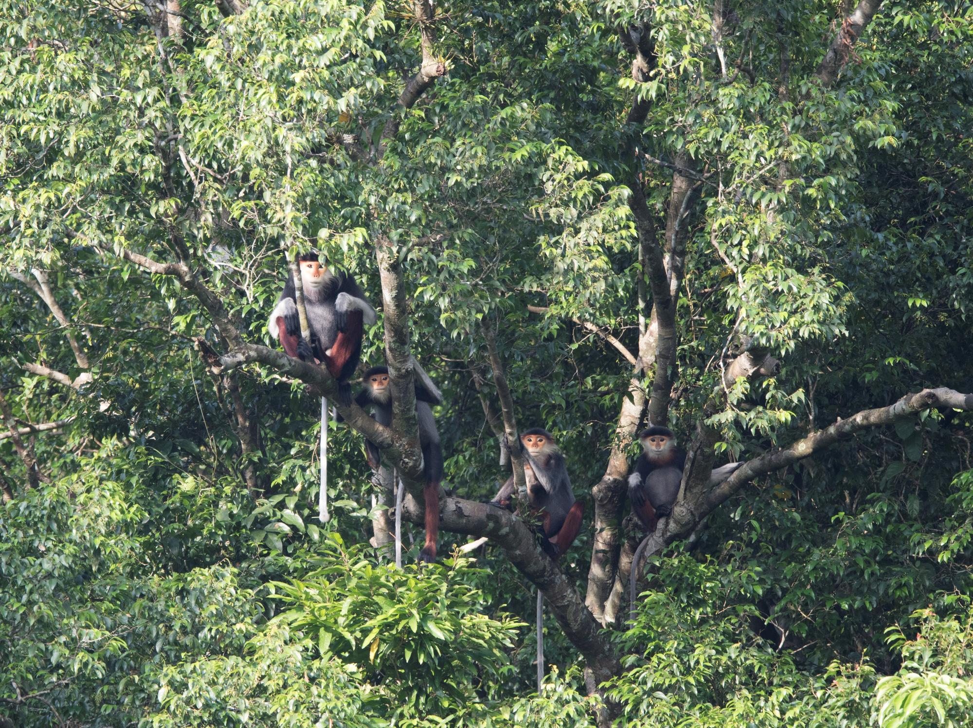 Chiêm ngưỡng những loài thú hoang dã độc lạ ở Khu dự trữ thiên nhiên Động Châu – Khe Nước Trong - Ảnh 1.