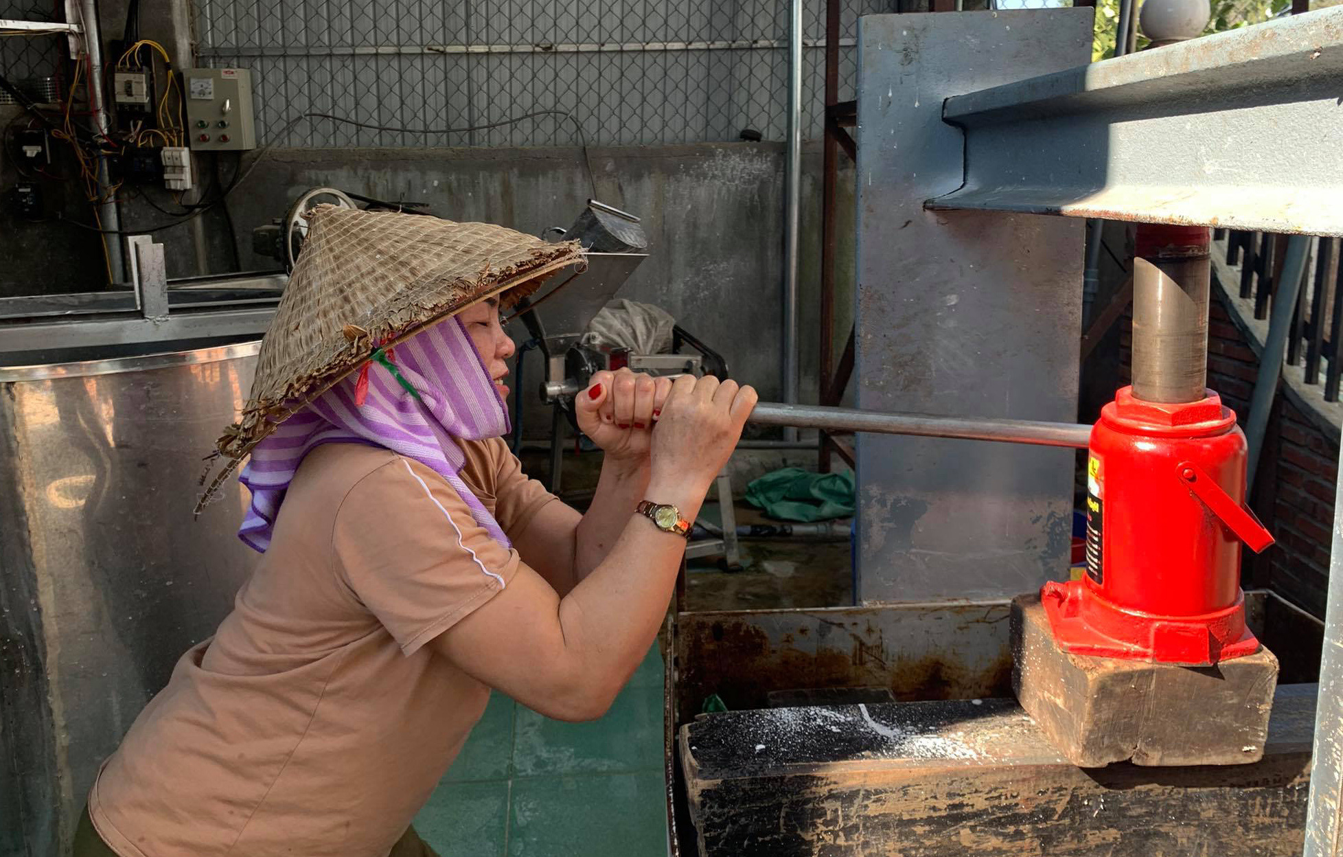 Bỏ cà phê, tiêu nông dân làm việc này để kiếm hàng trăm triệu mỗi năm - Ảnh 2.