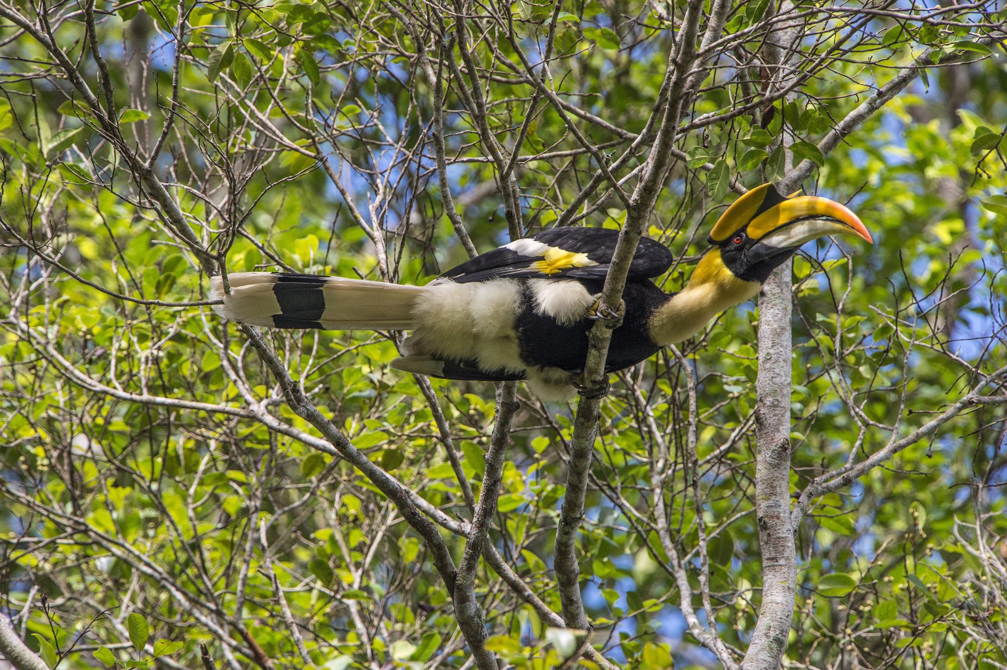 Chiêm ngưỡng những loài thú hoang dã độc lạ ở Khu dự trữ thiên nhiên Động Châu – Khe Nước Trong - Ảnh 3.