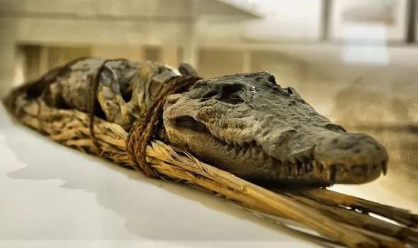 Rợn người nghi thức ướp xác cá sấu đáng sợ của người Ai Cập cổ - Ảnh 1.