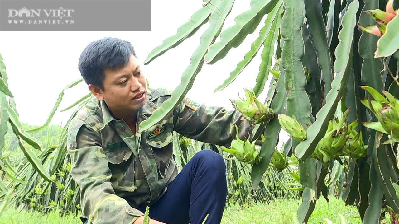 Phú Thọ: Trồng cây ruột đỏ chi chít hạt, chàng trai trẻ này khấm khá nhất vùng - Ảnh 1.