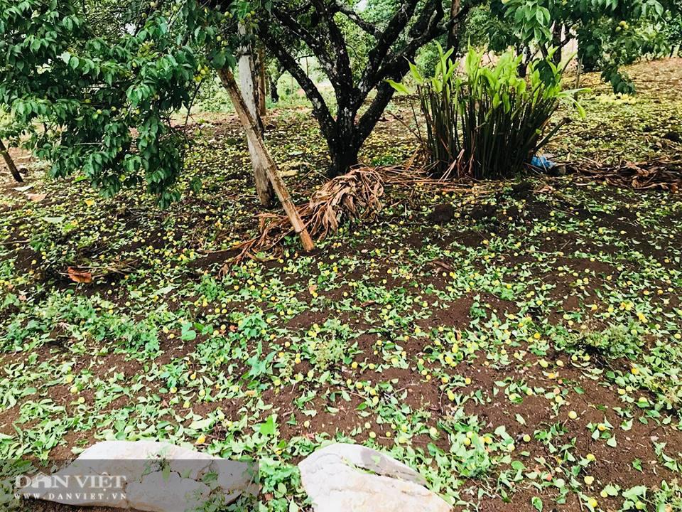 Sơn La: Thiệt hại 750 triệu đồng do mưa đá gây ra  - Ảnh 1.
