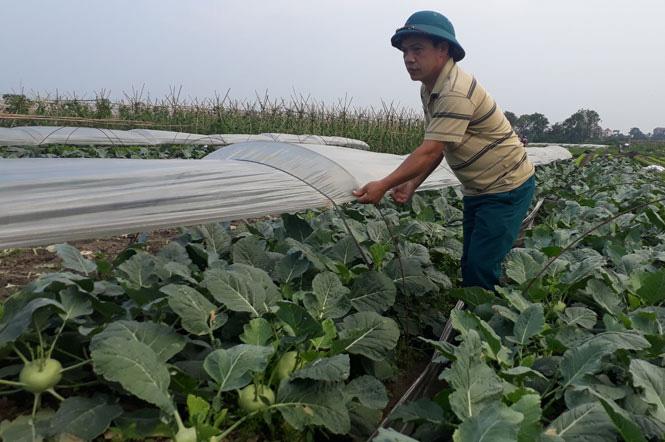Hà Nội: Nông dân phấn khởi khi giá rau xanh đã tăng nhanh chóng - Ảnh 1.